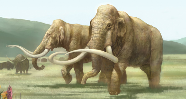 Image result for Mammoth tusk