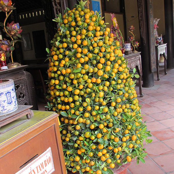 fruits  voyage to vietnam, Beautiful flower