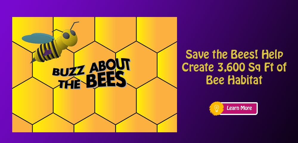 The Buzz about the Bees